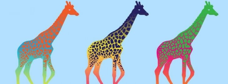 Giraffes Three Series Colorful