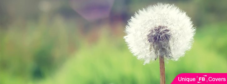 Countryside Dandelion