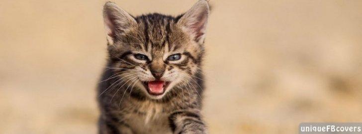 Cute Kitten Animal