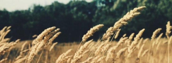 Nature Field Summer