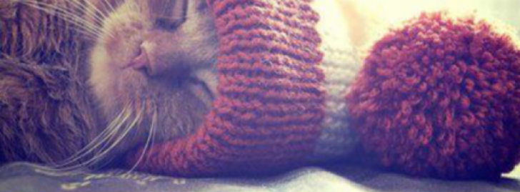 Tumblr Style Facebook Covers | Animales Fb Cover ...  Tumblr Style Fa...